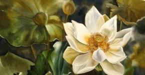 waterlilly-paintings