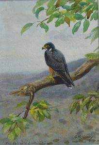 falcon-painting