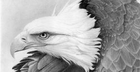 bird-neck-pencil-drawing