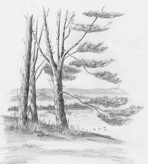 pencil drawing trees
