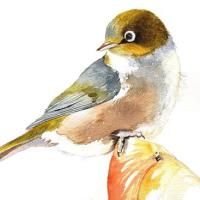 Watercolor Paintings Of Birds