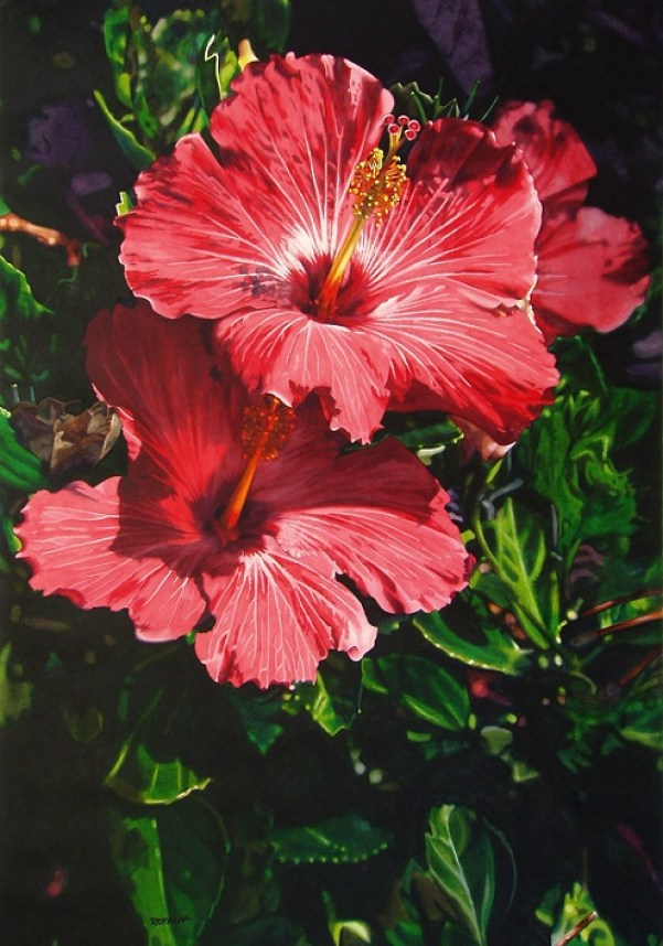 hibiscus-paintings