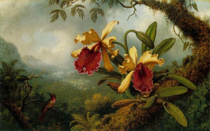 martin-johnson-heade-orchid