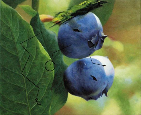 paintings-berry