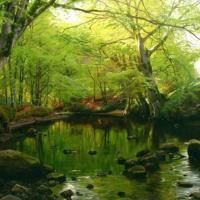 Realistic Landscape Oil Paintings By Peder Monsted