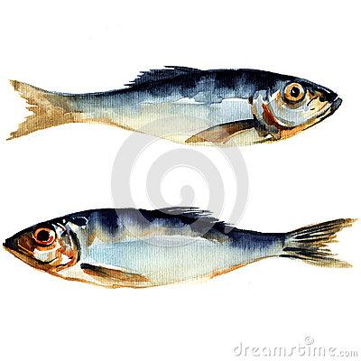 watercolor-fish-paintings