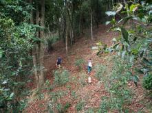Hiking the tea fields
