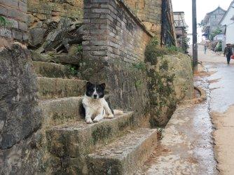 Cute dog surveys the scene in YiWu.