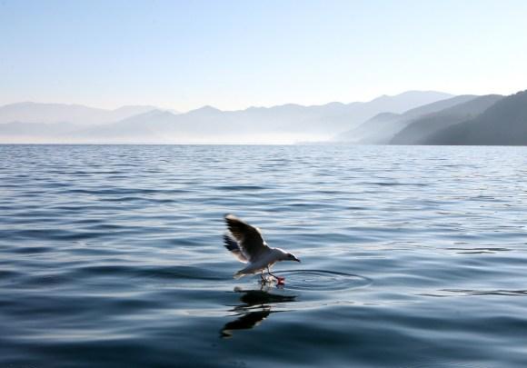 lugu-lake-1562856_1920