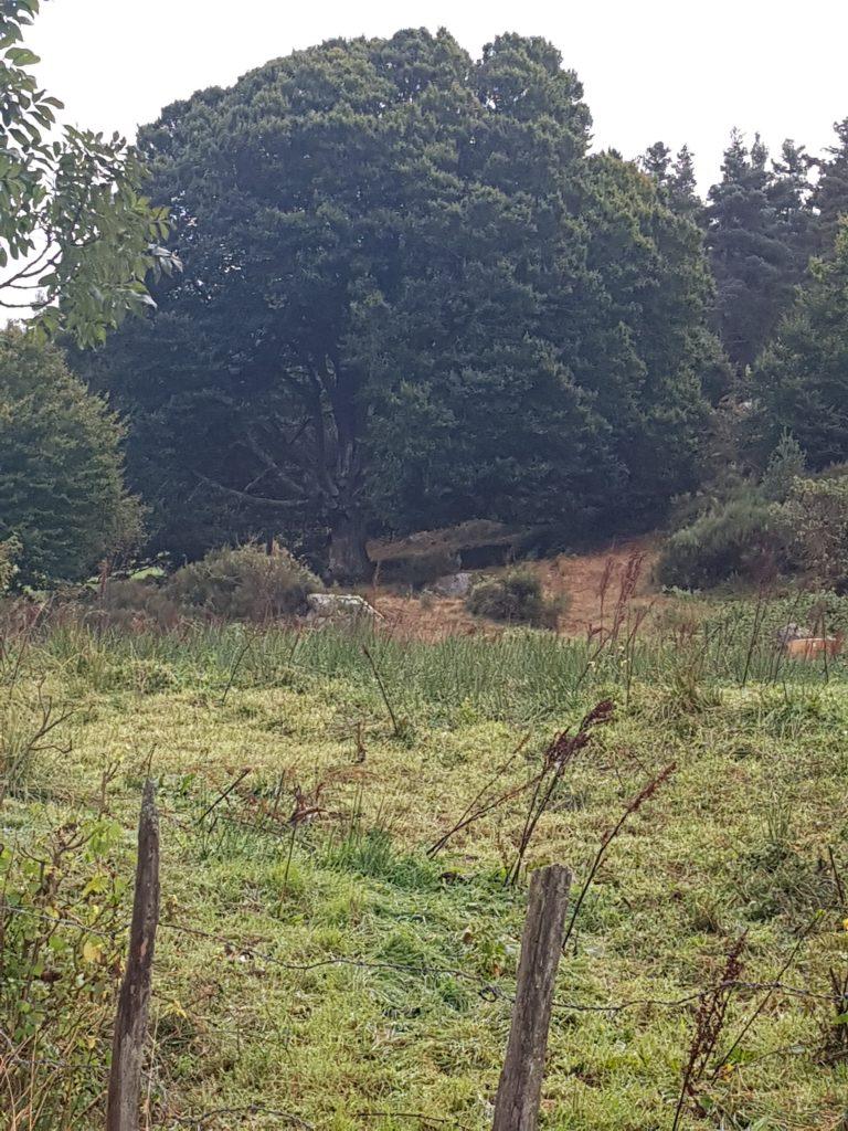 Domaine du Sauvage forest