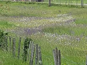flowers close to Saint-Jean-Mirabel