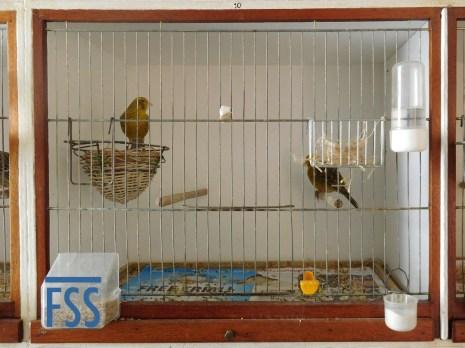 Manolo cage-fss