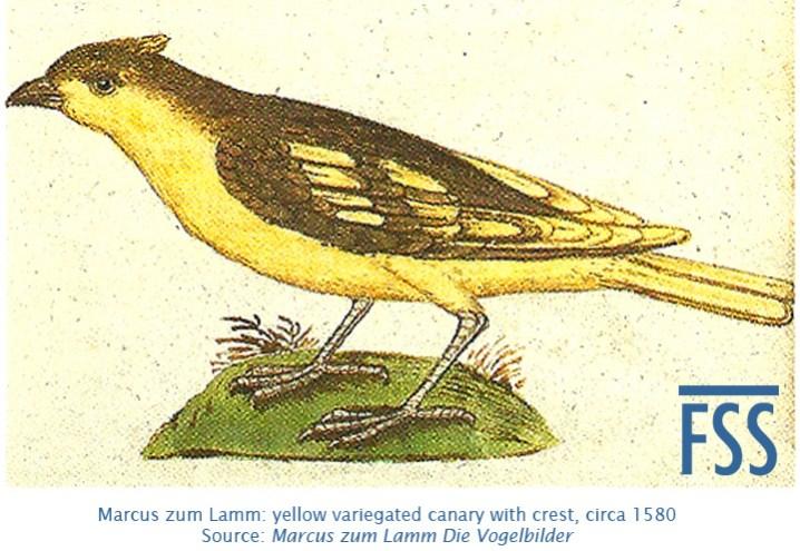 zum Lamm Canari vogelin (crest)-fss