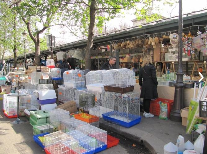 Bird market Ile de la cite