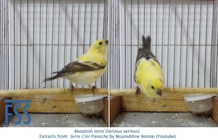 mutation-serin-bennai-fss