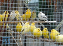 Piet Renders' pensioners in the aviary