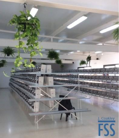 La Carlota 2017 interior 2-FSS