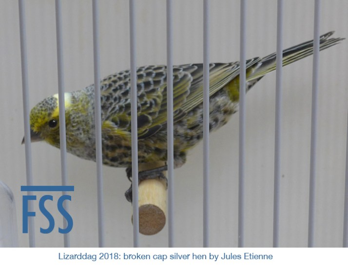 Lizarddag 2018 BCSH 2 JEtienne-FSS