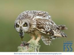 Iain Leach short eared owl-FSS