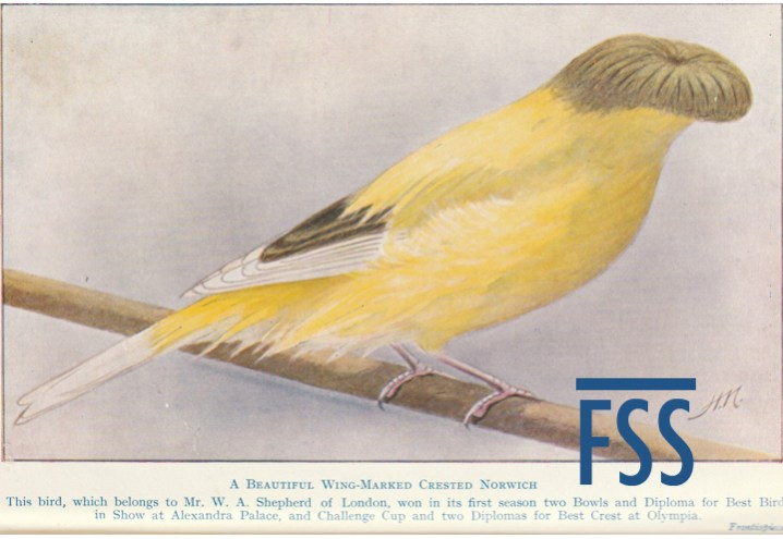 Crest & Gloster canary history
