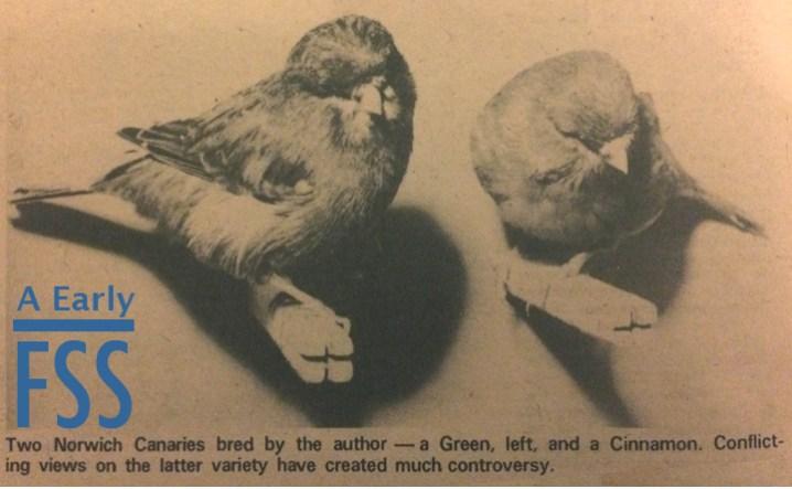 Alf Barnes Cinnamon Norwich canaries