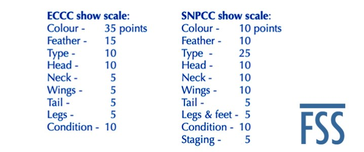 Cinnamon Norwich show scales