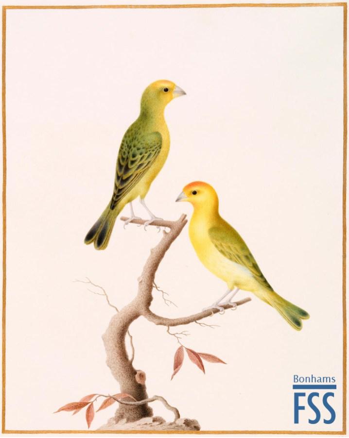 Nicolas Robert a pair of Lizard-like birds