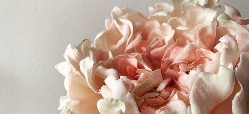 pink gumpaste peony example