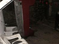 fauna del nido d'aquila: i gatti
