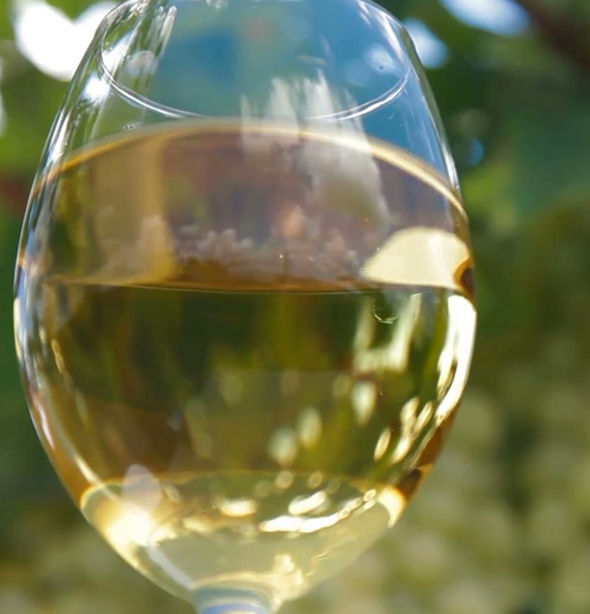 Fine Wine Master