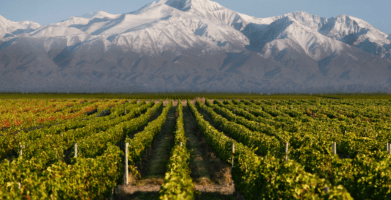 Mendoza vineyards
