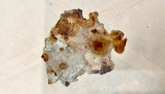 A fragment of paper.