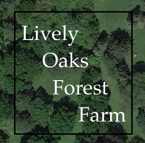Lively Oaks Forest Farm: Tour. Sunday 8/26/18, 11am-12pm