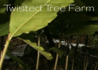 Twisted Tree: Tour. Saturday, 2:30-4pm