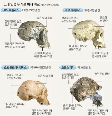 고대 인류 두개골 화석 비교 - 진화론