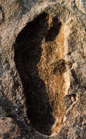 래톨리 발자국 - 366만년 전 지층의 사람 발자국