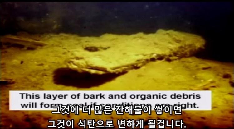 세인트 헬렌산에 나무 껍질들이 바닥에 쌓이는 모습 - 석탄층의 형성 - 젊은 지구의 지질학적 증거
