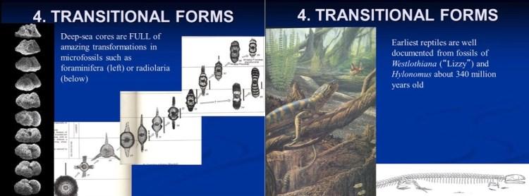 전이 화석 - 도날드 프로세로 - 진화론