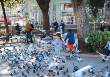 A girl is chasing pigeons in Barcelona