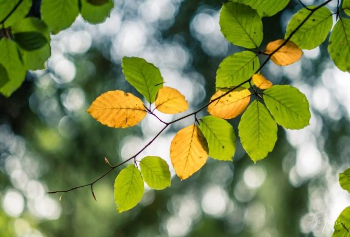 autumn leave colorful