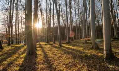 Sonnenuntergang im Wald auf Rügen