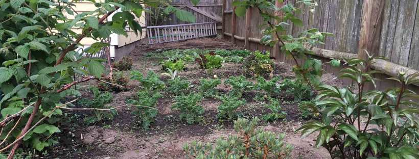 how to manage garden