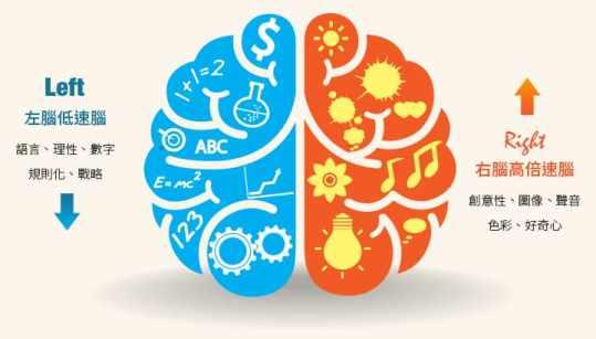 大腦的兩個半球