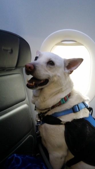 On my BA flight!