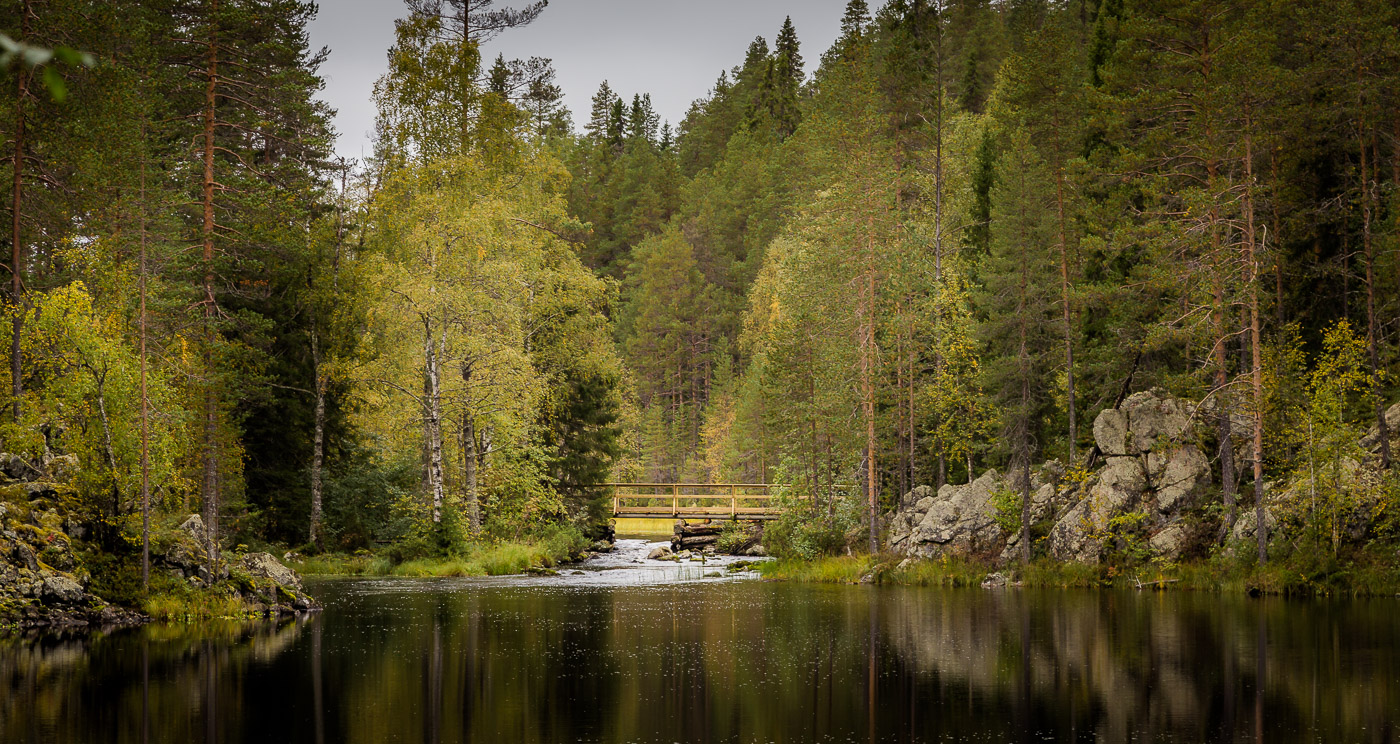 Finnish forests and lakes