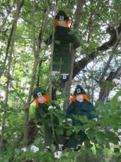 Tree climbin'!