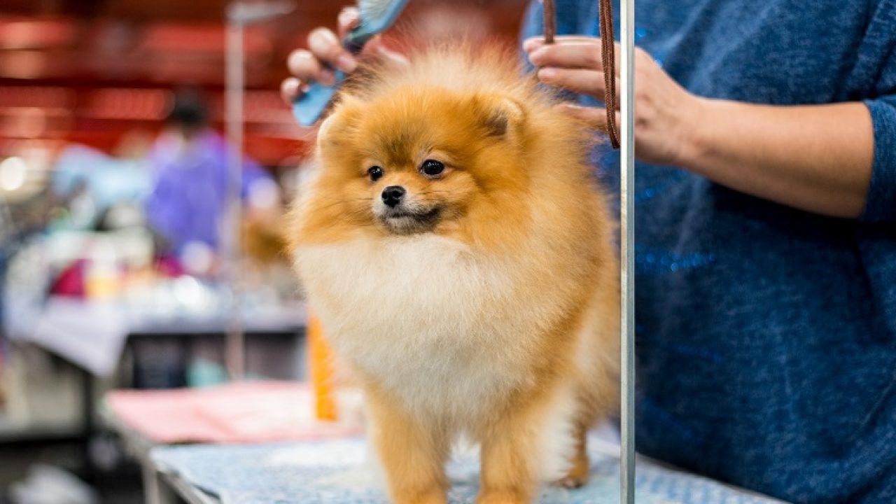 dog grooming