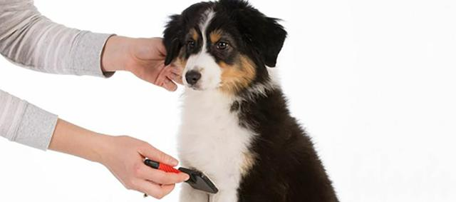 dog hair grooming