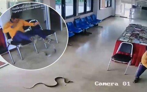 Lo típico: estás esperando en comisaría, y te ataca una serpiente