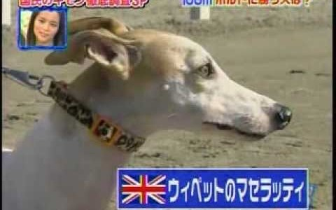 Perros vs el record mundial de Usain Bolt en los 100m